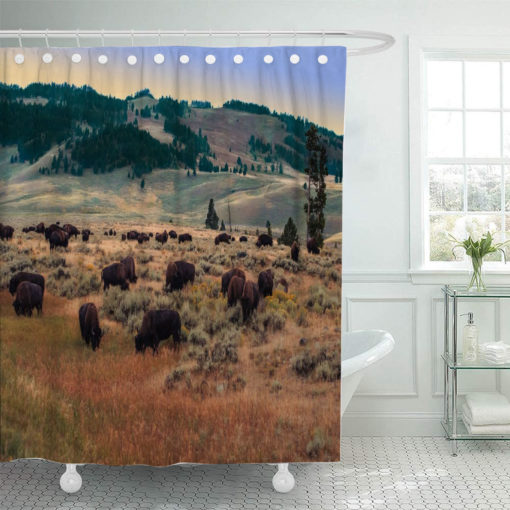 Bison20in20Paradise 873758